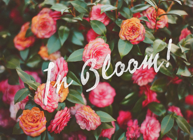 In Bloom: Portland Tour